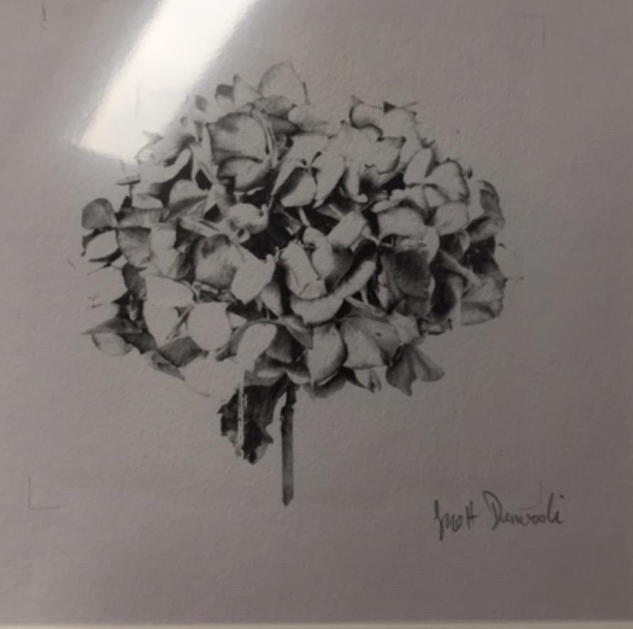 Hydrangea Print by Scott Dunwoodie